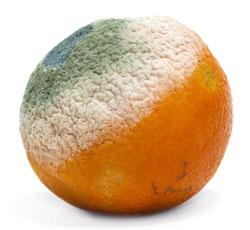 Zgniły orange