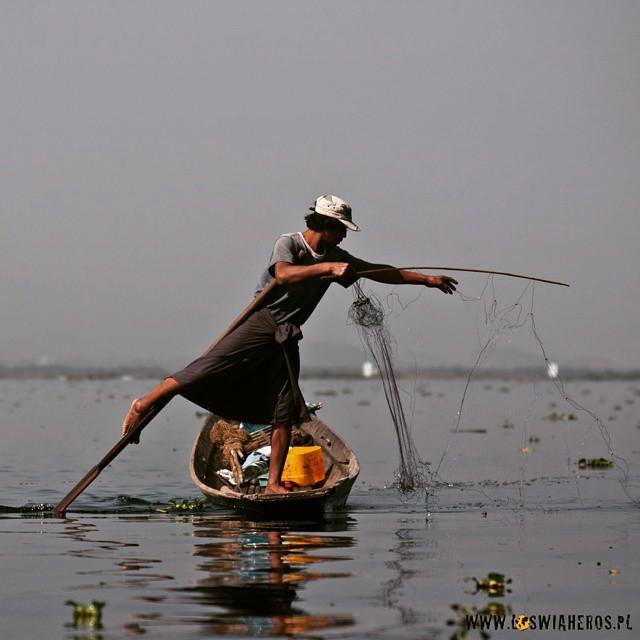 Nie wiem, co się dzieje, ale ostatnio ciągle pojawiają się pytania o #Birma Chyba sezon na ferie zimowe, no więc postanowiłem zrobić taką zgrabne galerie zdjęć na blogu z jednego z piękniejszych miejsc w tym kraju - #Inle Łąkę. Niby bardzo turystyczne miejsce, ale mimo wszystko da się urwać i poruszając po jeziorze trochę samemu. Stay tuned a dziś na przedsmak ryb, który naprawdę nie wiem jak to robi, że nie wpadnie do wody z tym wiosłem!  #Burma #Myanmar #travel #podróże #podróże #jezioro #lake #Azja #Asia
