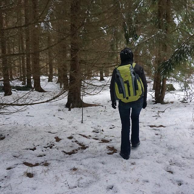 W poszukiwaniu żubra,  czyli wędrowanie przez Puszczę Białowieską i delektowanie się zimą z prawdziwego zdarzenia! #Białowieża #BPN #puszcza #Podlasie #Hajnówka #las #Polska #żubr #dzik #ryś
