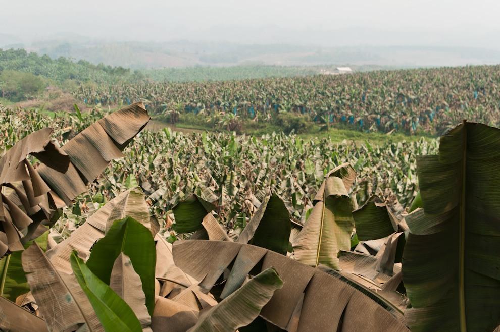 Tyle mniej więcej zostało zdżungli wpłn-zach Laosie.