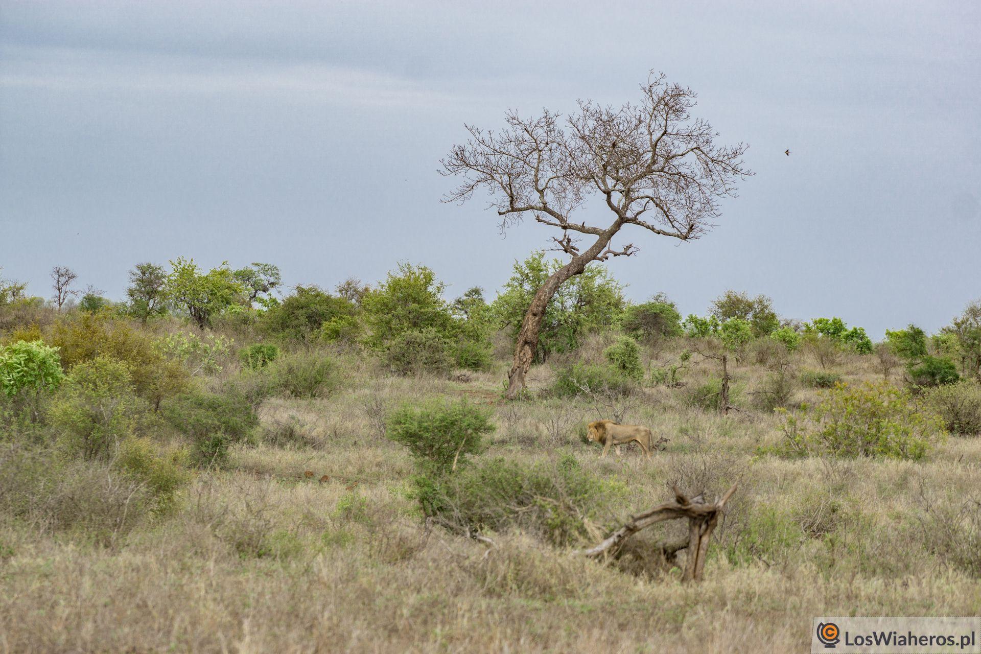 Zimbabweans w Afryce Południowej