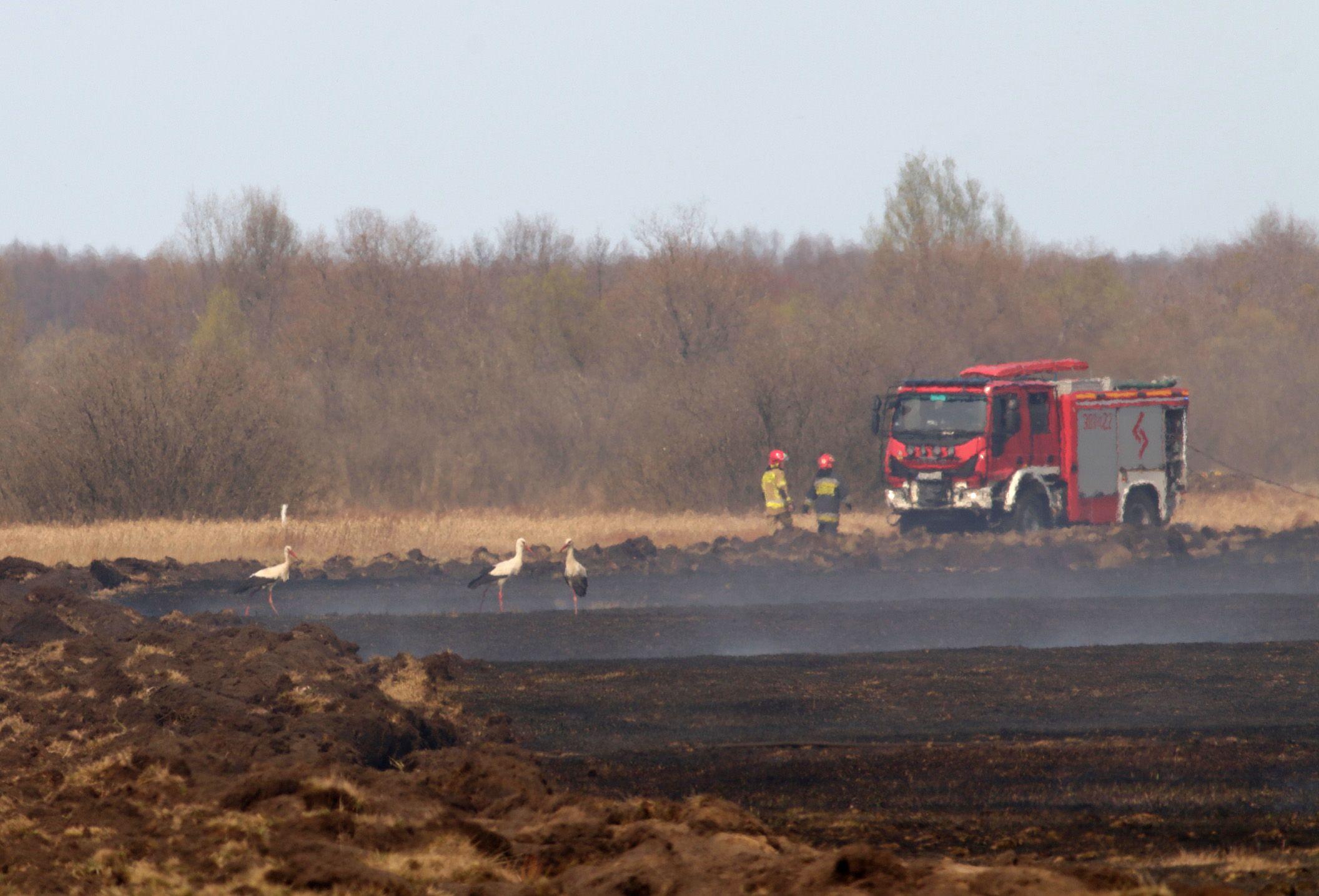 Fot. Piotr Tałałaj, Biebrzański Park Narodowy