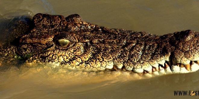 ach_te_krokodyle_oczy