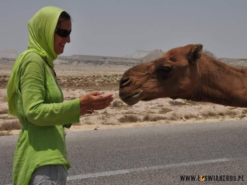 Alicja karmi wielbłąda.