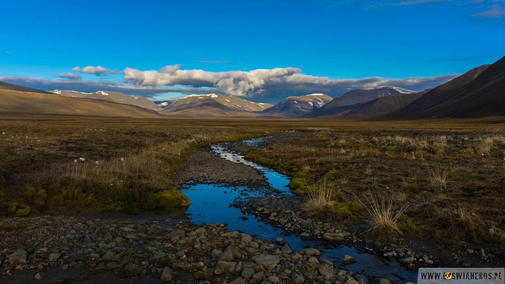 arktyka_spitsbergen_tundra-03495