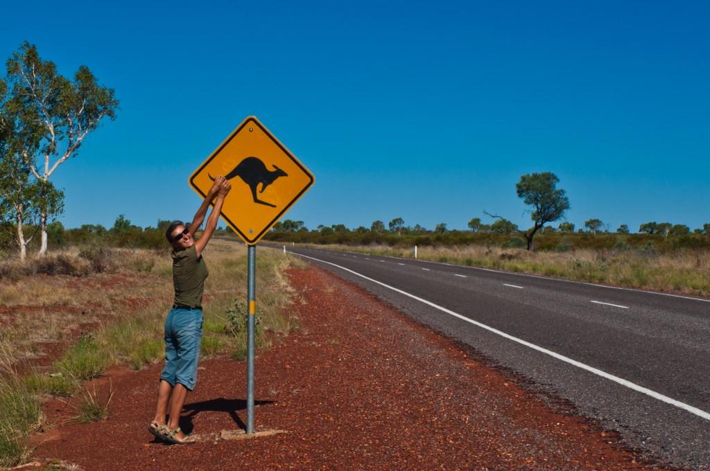 Australijskie kangury są wszędzie!
