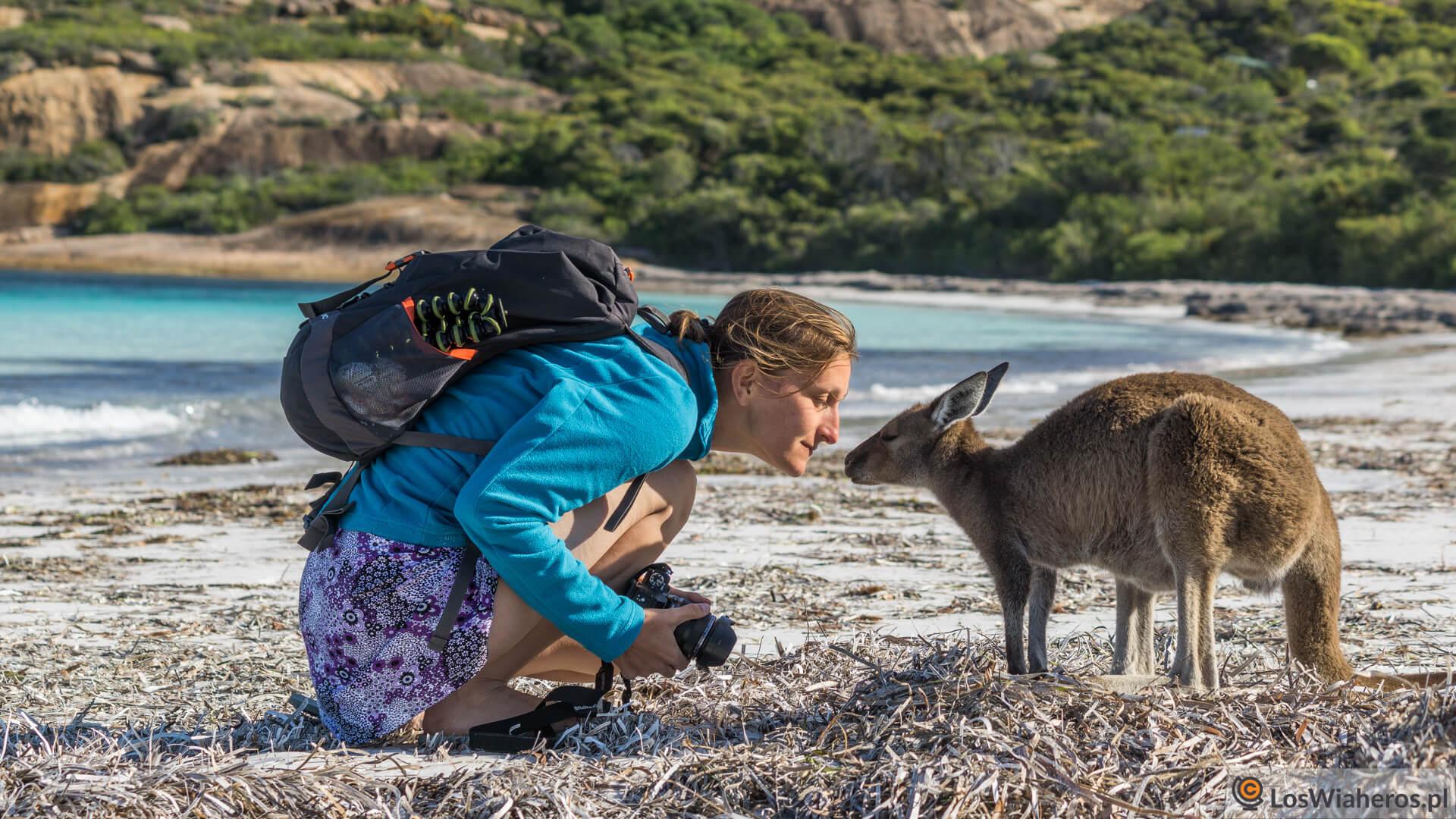 Spotkanie dwóch kangurów w Lucky Bay :)