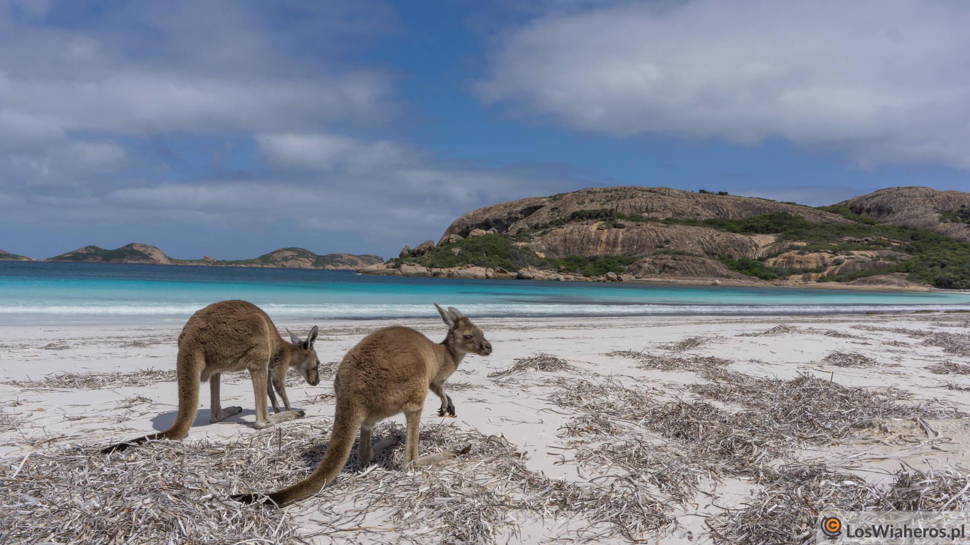 """Gdynia - """"Tam gdzie skaczą kangury, czyli Pan Kulka w Australii"""" @ Centrum Nauki EXPERYMENT w Gdyni Instytucja kultury Al. Zwycięstwa 96/98"""
