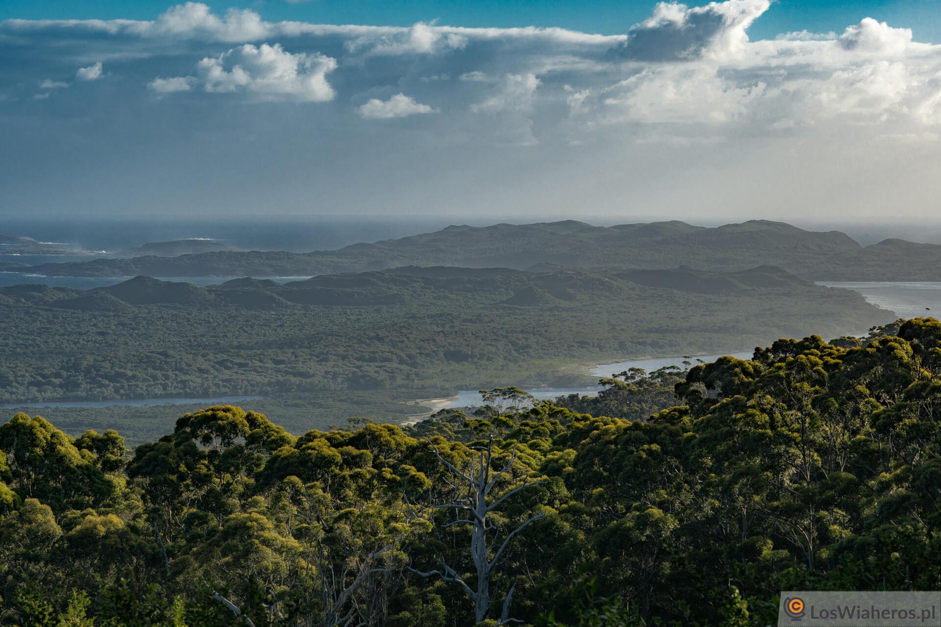 Widok rozpościerający się na okolice Walepole z tzw. Giant Tinde Tree Lookout.