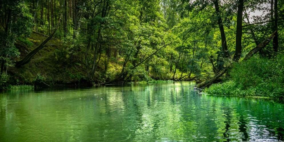 bory_tucholskie-rzeka-brda-995x498.jpg
