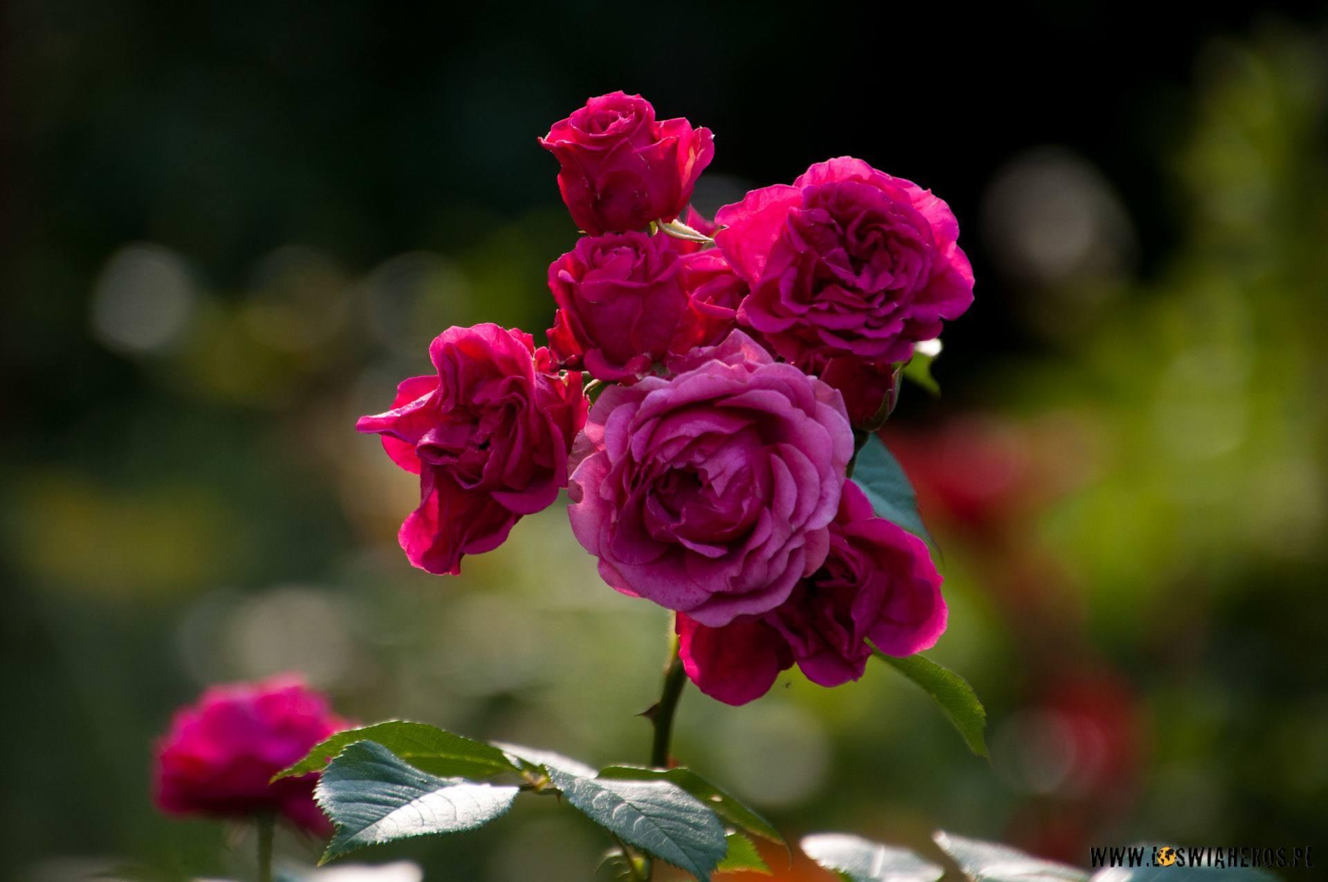 Kwiaty sfotografowane gdzieś przypadkiem [f/6.3, 270mm]