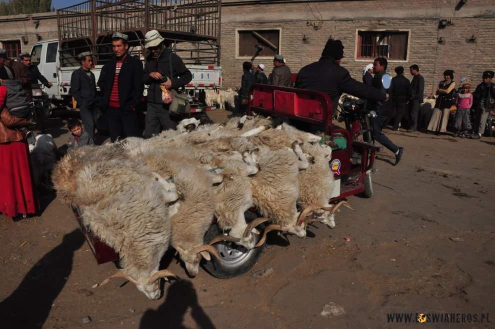 Owce czasem przewożone wprzedziwnych warunkach - Hotan
