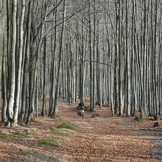 W drodze ze szczytu góry #Jałowiec w stronę Babiej Góry przez przepiękny las wyścielony jesiennym lišćmi... #Beskidy #rower #wycieczkirowerowe #Polska #las #góry