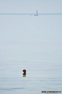 Po szyję wmorzu, czyli relaks pokazachskim stepie