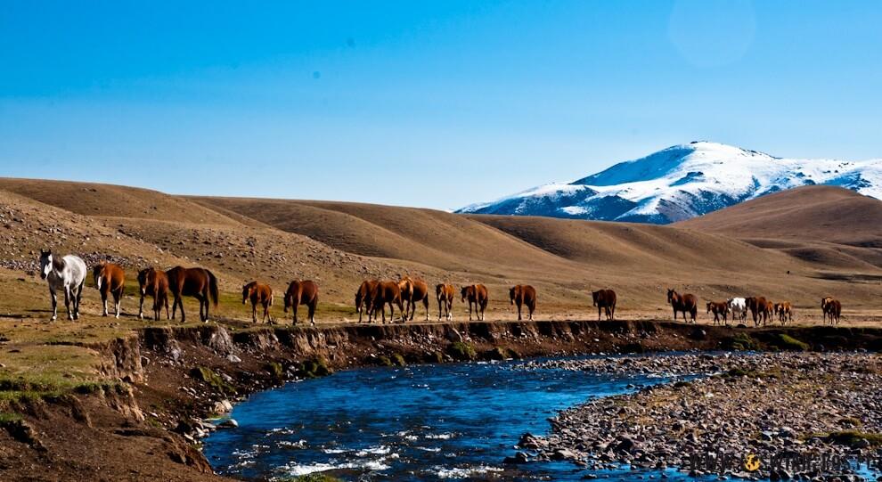 konie schodzące do wodopoju.