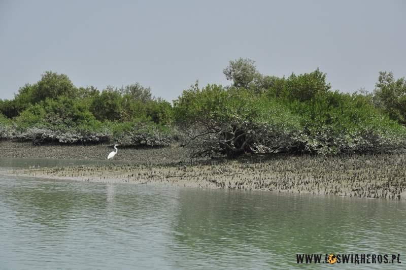 Lasy namożynowe naWyspie Qeshm - Mangroove Forest