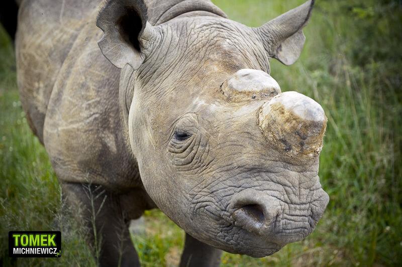 loswiaheros-10-nosorozce-z-imire-zimbabwe