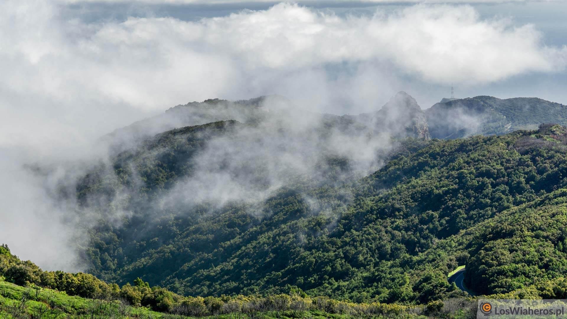 wyspy Kanaryjskie, La Gomera, las laurowy