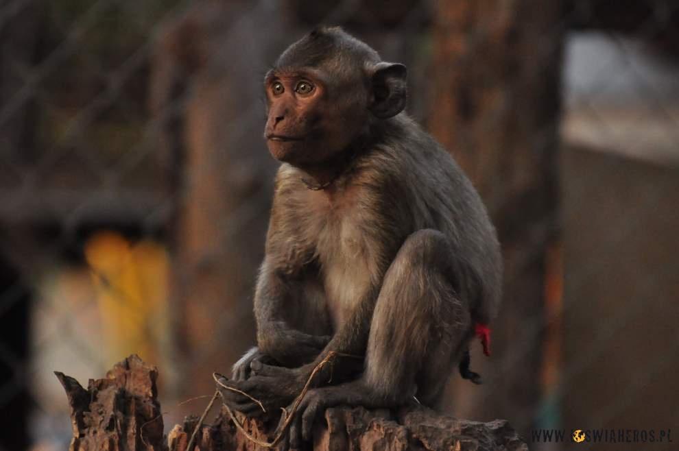 Małpka naszych gospodarzy.