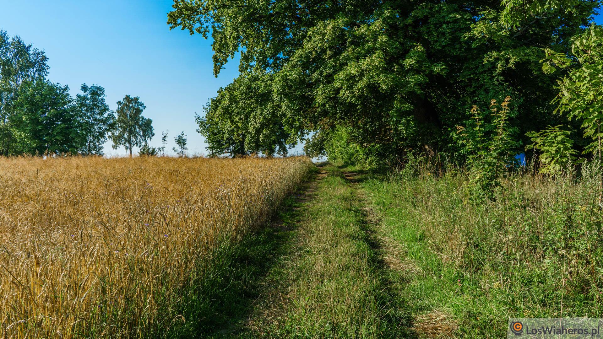 Droga przez mazurskie łąki...