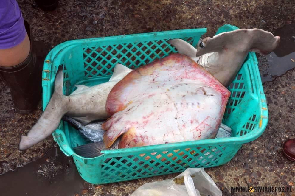 Tu nieryba, amały rekin młot. Też wyłowiony...Wietnamczycy niemarnują nic?