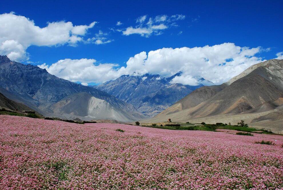 nepal_trekking_annapurna_DSC_8434