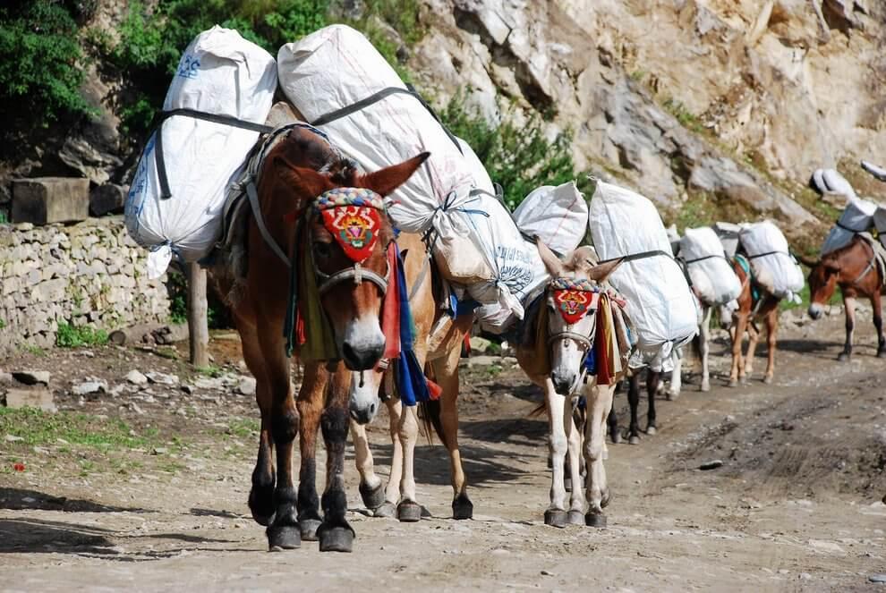 nepal_trekking_annapurna_DSC_8526