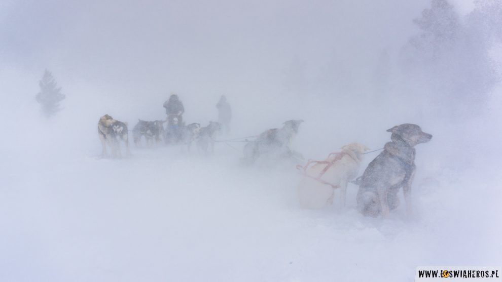 norwegia-geilo-wichura-psy