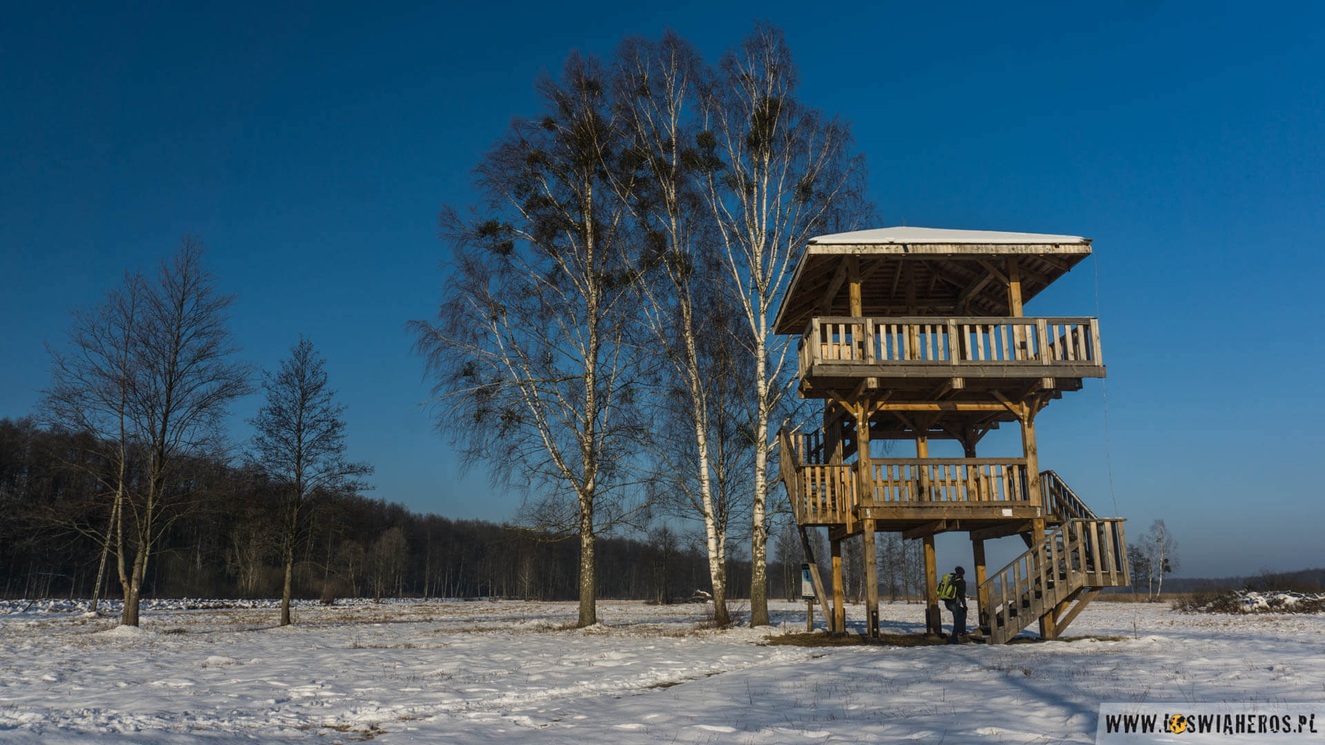 Ambona do podglądania ptaków i zwierząt w Puszczy Białowieskiej.