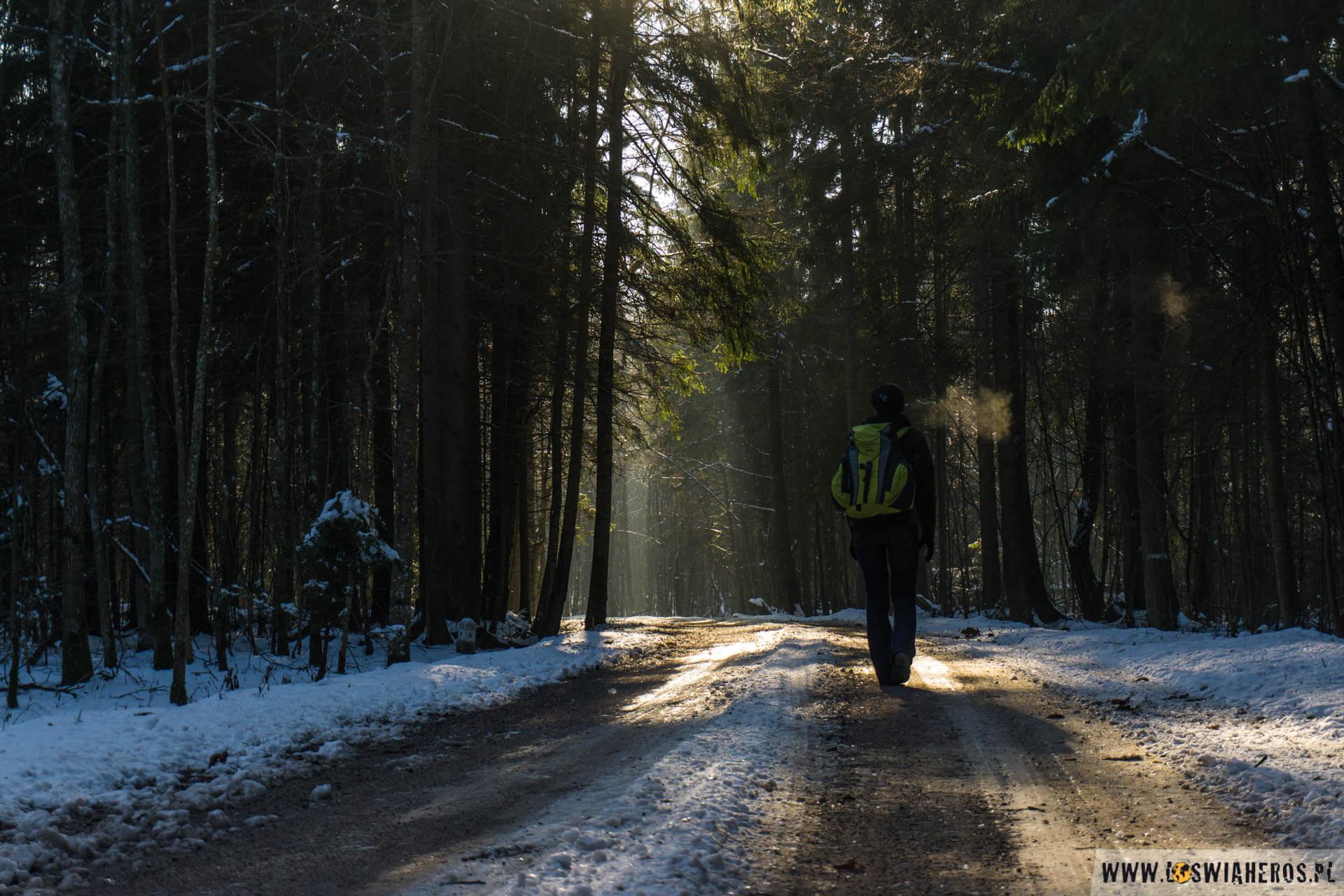 Puszcza Białowieska w mroźny, zimowy dzień.