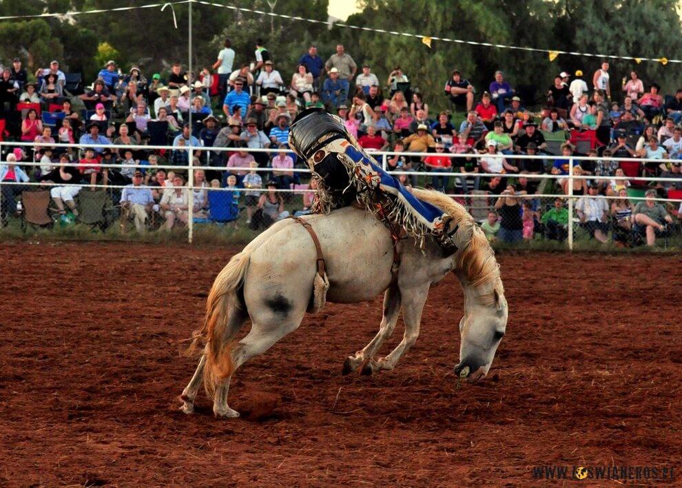 Bareback bronc riding, czyli ujeżdżanie konia nieosiodłanego.