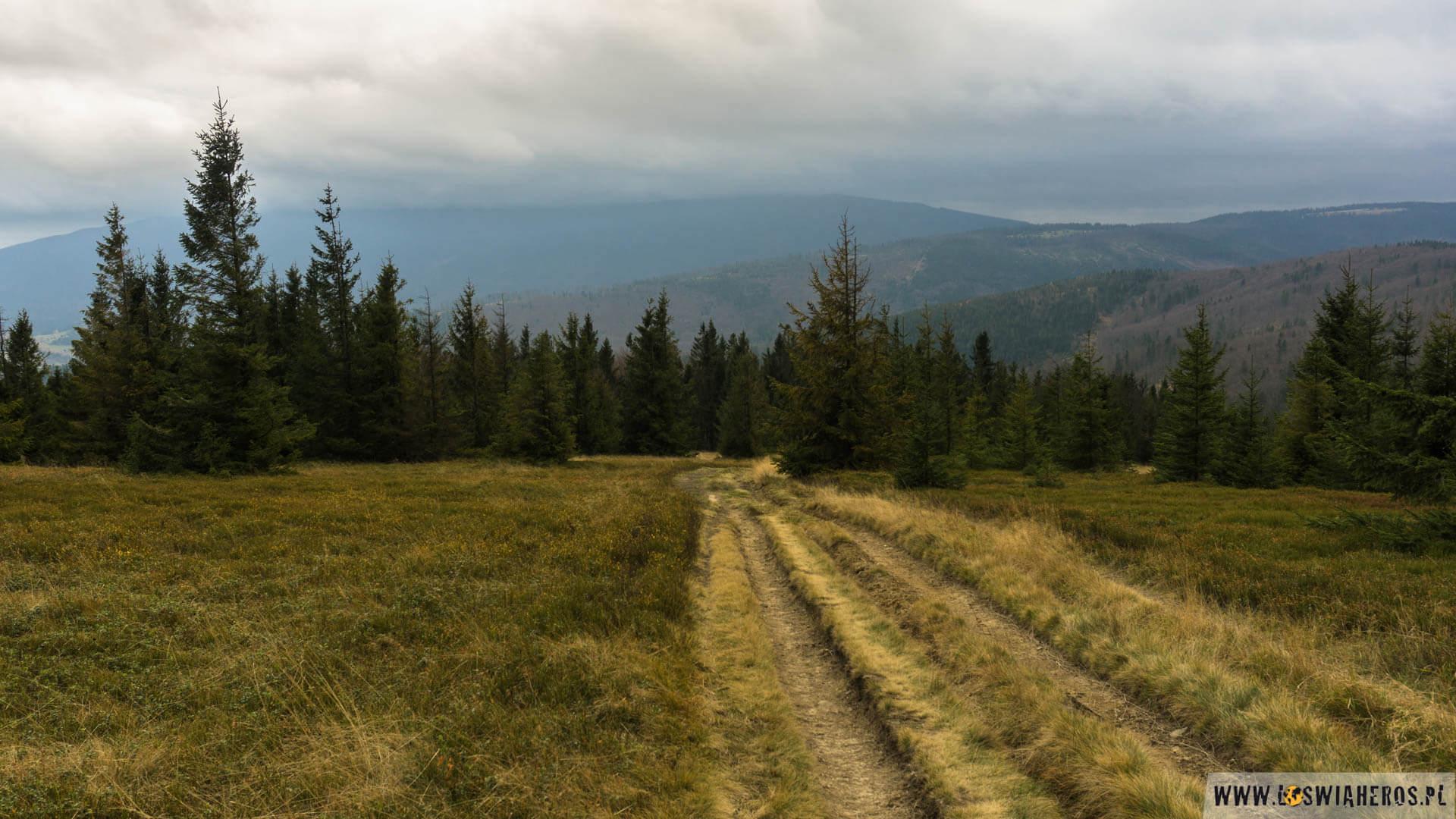 Zjazd wstronę Zawoi iBabiogórskiego Parku Narodowego.