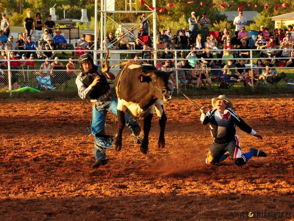Team roping during rodeo.