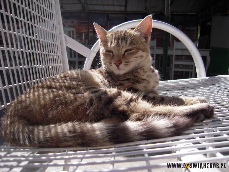 Kot przybłęda - nowy członek team'u Madiny.