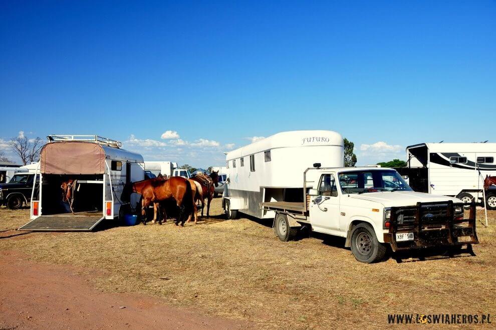 Parking, atam przyczepy, konie, klasyczne terenówki.